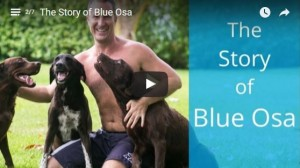 The Story of Blue Osa